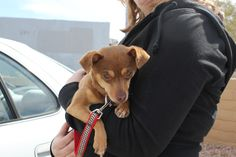 Munch's replacement on a trip to rescue, he was adopted right away.