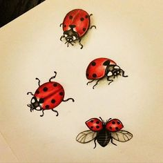 ladybug art artwork on Instagram