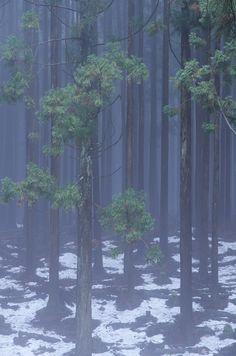 冬木立Winter