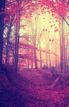 Magical Forest.