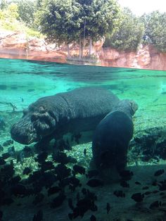 agua... 'hipopotamizada'