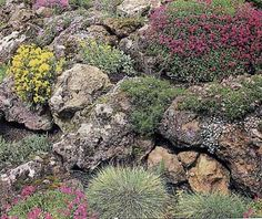 Alpine Garden...low-growing plants, including annuals, perennials, shrubs, bulbs, or succulents. Pictured: this alpine garden combines alyssum, aubretia, creeping phlox, and the tiny succulent Sedum for a good deal of color.