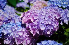 La flores de la abuela