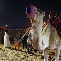 #dubai #night #trip #travel #camel #desert #photooftheday #photography #love #beautiful #awesome