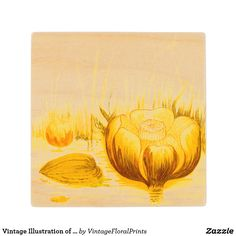 Vintage Illustration of Yellow Pond Lilies Wooden Coaster