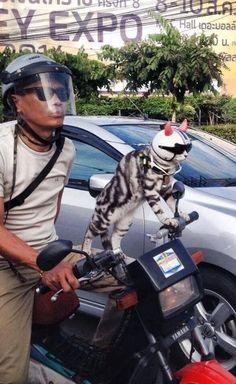ทาสแมว | via FacebookWe Heart It
