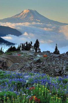 Mout. Adams, Washington , USA. Beautiful places <3
