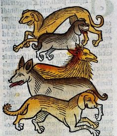 Popular animals, even in the later Middle Ages. Woodcut in early-printed book with four kinds of dogs (Mainz, 1491)