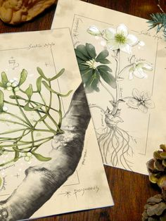 Christmas Prints, Gallery Wall Set of 2 Prints, Botanical Prints, Cottage Decor, Farmhouse Decor, Mistletoe, Christmas Rose