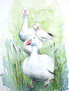DRIE witte ganzen originele aquarel en door PatriciaHendersonArt