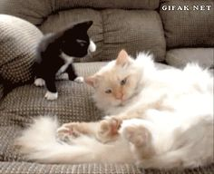 What the older sibling must feel like, I wouldn't know I'm the kitten