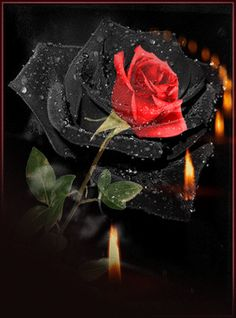 Rose and candles . Beautiful Love Pictures, Beautiful Flowers Images, Beautiful Gif, Beautiful Roses, Flowers Gif, My Flower, Pretty Flowers, Evening Greetings, Good Night Greetings
