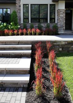 Nice pop of red. Modern Landscaping, Outdoor Landscaping, Front Entrances, Backyard, Patio, House Front, Curb Appeal, Garden Plants, Exterior Design