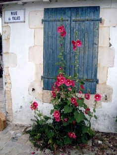 Hollyhocks on Blue | Content in a Cottage