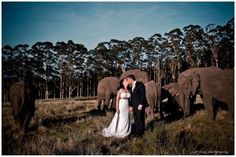 Celebrate your special day with elephants!