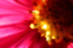 Garden flowers - Extreme closeup - 379