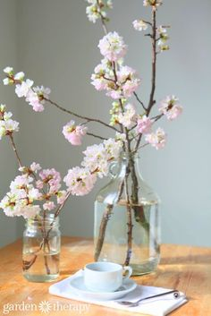 Cherry blossoms are so easy to force indoors! from How to Force Spring Blanches to Bloom Indoors Cut Flowers, Fresh Flowers, Spring Flowers, Beautiful Flowers, Shabby Flowers, Indoor Flowers, Indoor Plants, Spring Branch, Flower Branch