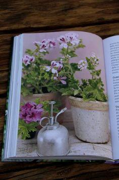 Dans le jardin de Isabelle Le livre est en italien mais comme je l'ai déjà écrit,  pour un francophone, lire l'italien n'est pas très difficile.  Simonetta aborde tous les aspects du jardinage que j'aime  avec énormément de passion et de sens de l'esthétique.  Je m'y retrouve complètement.