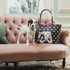 """For the third limited edition Disney x Cath Kidston collection, we've joined forces with Disney's iconic Dalmatians"""". The 101 Dalmatians x Cath Kidston collection launches on Thursday May! I Love Dogs, Puppy Love, Spotty Dog, Disney Souvenirs, 101 Dalmations, Dalmatian Dogs, Cath Kidston, Cute Puppies, Fur Babies"""