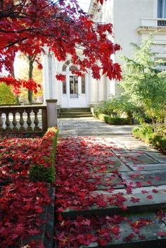 Must Read Expert Tips from Landscape Designers for a Show Stopping Fall Landscape
