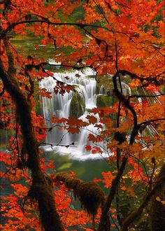 """coiour-my-world:  """" Fall Color and Lower Lewis River Falls, WA ~ www.randalljhodges.com  """""""