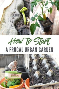 Wondering how to start a frugal urban garden bed? These practical tips will help you start the best budget-friendly garden from scratch! Looking for more gardening tips? Here's my beginner's guide to gardening. #gardening #urbangarden #frugalgardening #beginningagarden #howtostartagarden Household Expenses, Household Tips, Growing Strong, Starting A Garden, Plant Needs, Lots Of Money, Grow Your Own Food, Best Budget, Diy Skin Care
