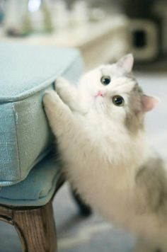 """Can I pweease sit in your lap?""  #cuteanimals #babyanimals"