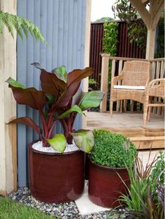 Colorful Glazed Containers Used for Exotic Plants - Home and Garden Design Idea's