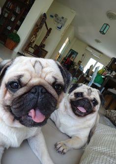 :D  I Love you guys  .. Pug