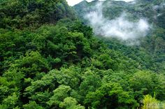 Madeira. Photo by Hugo Reis