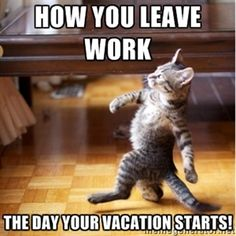 how you leave work the day your vacation starts! | walking cat