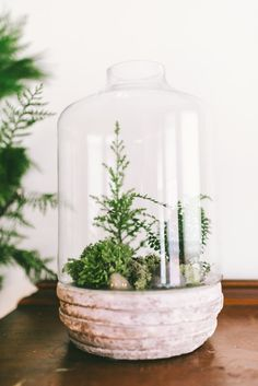 A gorgeous handmade terrarium.