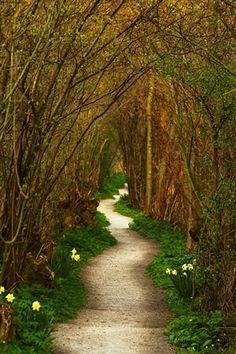 Yew Tree Tunnel, The Netherlands. Walking is good exercise & thus good for overall heart health! Walking outside in nature is really relaxing as well! Places To Travel, Places To See, Tree Tunnel, All Nature, Parcs, Pathways, Belle Photo, The Great Outdoors, Wonders Of The World