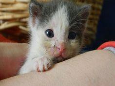 2 Tane Dünya Tatlısı Yavru Kedi Yuvasını Arıyor!!!