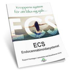 ECS rapporten ladda ner – SV   CBD olja