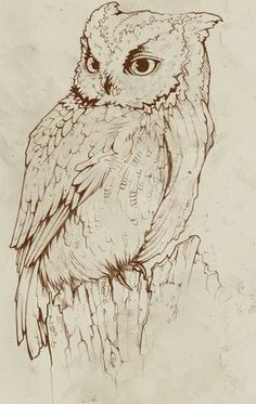 bring peace to midnight by Teagan White~use for pyrography pattern Wood Burning Stencils, Wood Burning Patterns, Wood Burning Art, Owl Art, Bird Art, Bird Drawings, Animal Drawings, Animal Sketches, Drawing Sketches