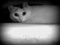 Poema: Gato negro de Emma Posada