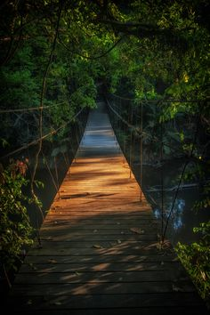 Late afternoon suspension jungle bridge in Khao Yai National Park, Thailand Thailand Adventure, Thailand Travel, Parc National, National Parks, Beautiful Islands, Beautiful Places, Khao Yai National Park, Thai Islands, Wanderlust