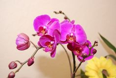 Розовые орхидеи для рабочего стола. . Обсуждение на LiveInternet - Российский Сервис Онлайн-Дневников