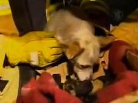 Heroic Dog Saves 4 Newborn Kittens from a Fire - Watch the Amazing Video!