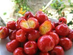 Acerola Cherry Seeds – Barbados West Indian Cherries – High in Antioxidants and Vitamin C - Modern Cherry Seeds, Baobab Seeds, Fruit Names, Homemade Coconut Oil, Puerto Rico Food, Acerola, Sandy Soil, Ginger And Honey, Organic Seeds