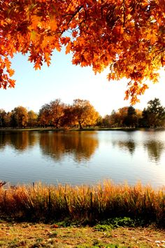 """""""Fall has always been my favorite season. The time when everything bursts with its last beauty, as if nature had been saving up all year for the grand finale. Beautiful Places, Beautiful Pictures, Autumn Scenes, Autumn Aesthetic, Fall Pictures, Belle Photo, Beautiful Landscapes, Autumn Leaves, Autumn Fall"""