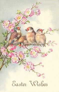 LM Studio: Vintage Postcard Birds in a cherry tree. Images Vintage, Vintage Pictures, Vintage Greeting Cards, Vintage Postcards, Vintage Birthday Cards, Vintage Bird Illustration, Vintage Illustrations, Illustration Art, Decoupage Vintage