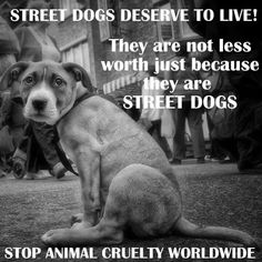 Street dogs deserve to live! They are not less worth just because they are street dogs Picture Quote #1