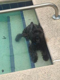 Big Kohl taking a dip n the pool!