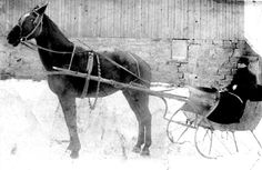 This is a picture of the black gelding pacer, Black Slipper. Trainer Hugh Ports kept the horse fit by jogging in a sleigh during the winter of 1902. Black Slipper raced at the 1902 Wayne County Fair (Wooster, Ohio) in the 2:22 Pace going for a purse of $ 250. Charlie Ports raced Black Slipper four heats where he finished 5 5 2 3 and was placed sixth overall out of the seven horses in the race. Times for the four heats were 2:22, 2:24 1/2, 2:23 1/2, 2:26 1/2. Standardbred Racing, Wooster Ohio, High Horse, Wayne County, Harness Racing, Old Photos, Vintage Photos, Work Horses, County Fair