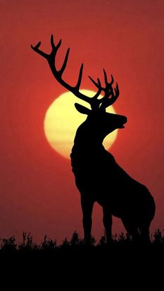 share# A deer is standing in the red sunset. share# A deer is standing in the red sunset. Hirsch Silhouette, Sunset Silhouette, Silhouette Painting, Animal Silhouette, Oil Pastel Drawings, Art Drawings, Painting Digital, Landscape Silhouette, Deer Drawing