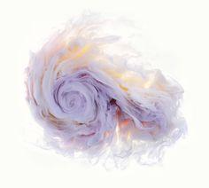 다음 @Behance 프로젝트 확인: \u201cAqueous Roses\u201d https://www.behance.net/gallery/48426975/Aqueous-Roses