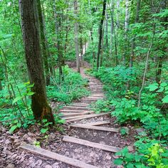 Hiking the Bruce Trail in Ontario: Limehouse, Devil's Pulpit and Rattlesnake Point. This is the oldest and longest marked trail in Canada. Backpacking Trails, Hiking Trails, Ontario Parks, Canada Ontario, Alberta Canada, Canadian Travel, Canadian Rockies, Ontario Travel, East Coast Road Trip