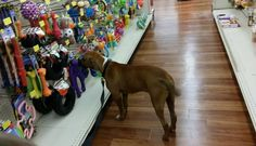 """Dog Who Survived Hell On Earth Picks Out His Very First Toy 